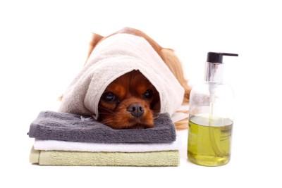 シャンプーボトルとタオルと犬