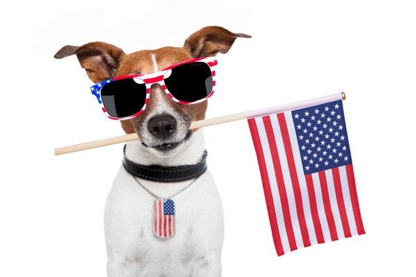アメリカ犬