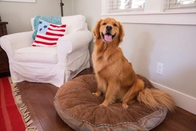 クッションの上でくつろいでいる犬