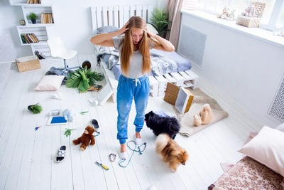 犬に部屋を荒らされて驚く女性
