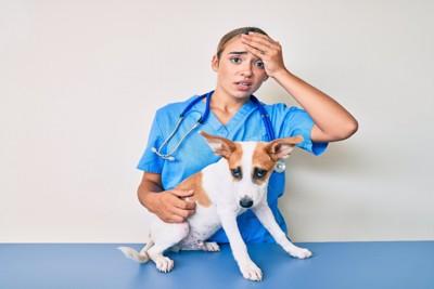 不機嫌な犬と獣医師