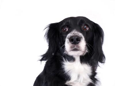 何となく不安そうな犬
