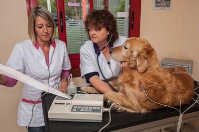 犬を診断中の医師たち