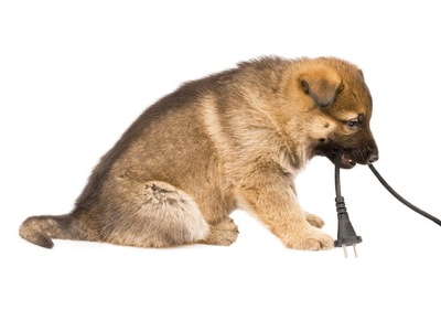電気コードを咥える犬