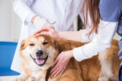 病院で撫でられている犬