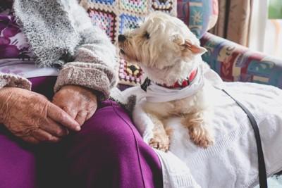 シニア女性の隣で甘えるように寄り添う犬