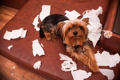 紙を散らかして遊ぶ犬