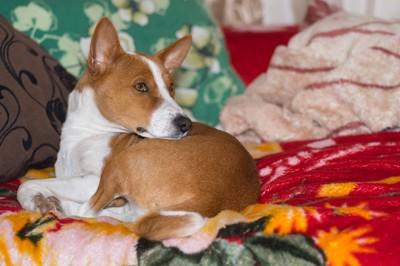 ソファでくつろぐ犬
