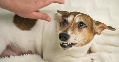 飼い主さんの手と歯を見せる犬