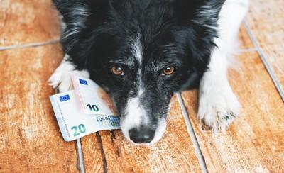 お金の上に伏せてこちらを見つめる犬