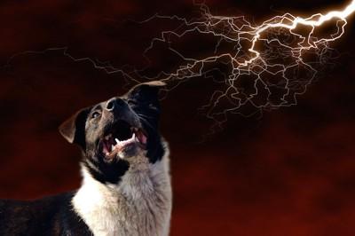 雷を怖がる白黒の犬