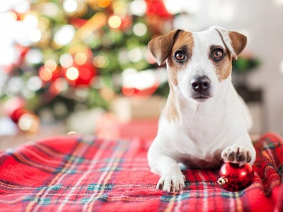 クリスマスの装飾と犬