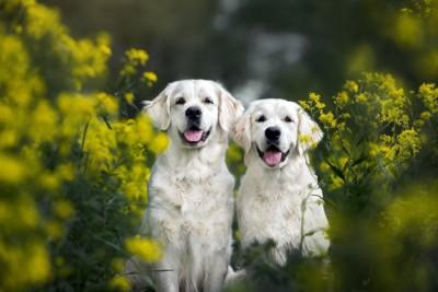 幸せそうに佇む2匹の犬