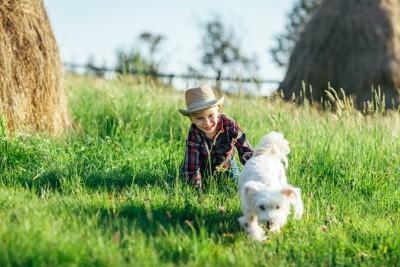 屋外で犬を追いかける子供