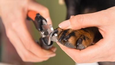 爪切りをしている犬の足