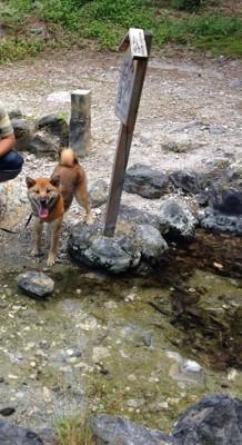河原で笑う犬