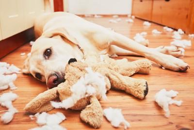 ぬいぐるみを引き裂いて床に寝転がる犬