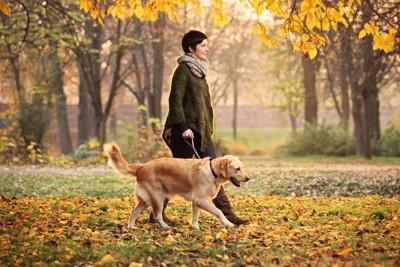 紅葉の中を散歩する犬と女性