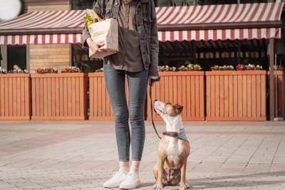 野菜の入った紙袋を持つ人と犬