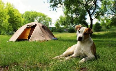 テントと芝生に座る犬