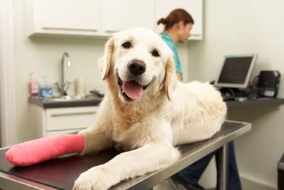 足にギプスをしている犬