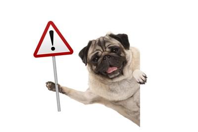 注意マーク掲げる犬