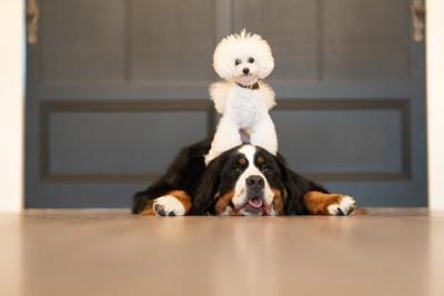 小さな犬と大きな犬