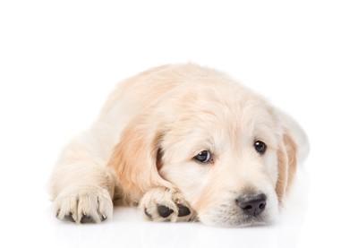 怯えて悲しげな犬