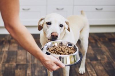 皿を見る犬