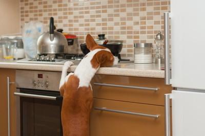 キッチンの作業台にアゴを乗せる犬