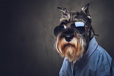 サングラスをかける犬