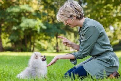 芝生で白い犬にしつけをする女性