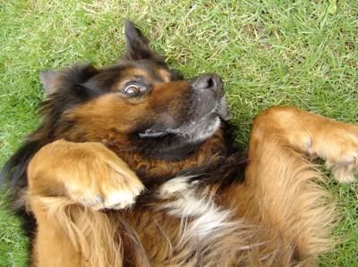 仰向けにされている犬