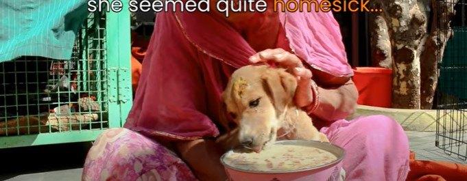 流動食を食べる子犬