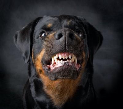 唸って威嚇する犬