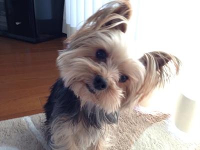 首をかしげている犬の写真