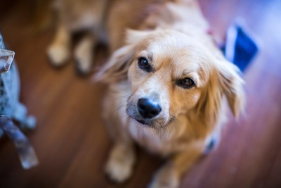 眼力の強い犬