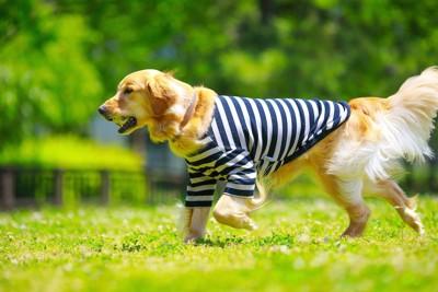 ボールを咥えて遊ぶ犬