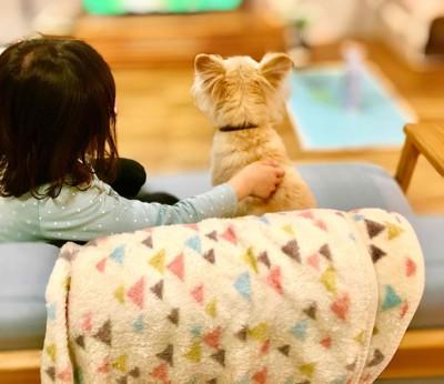 ソファーでテレビをみる雑種犬