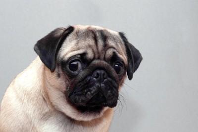 複雑な表情で見つめる犬