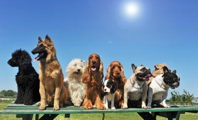 太陽と9匹の犬