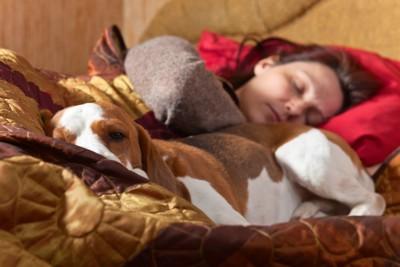 女性と一緒に寝る犬