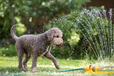 水で遊んでいる犬