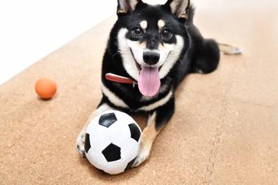 サッカーボールと笑顔の黒柴