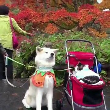 秋田犬と猫