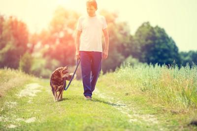 飼い主と一緒に散歩を楽しむ犬