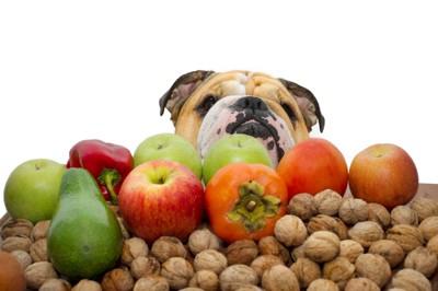 果物とブルドッグ