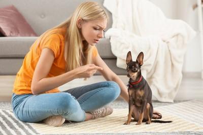叱る人と叱られる犬