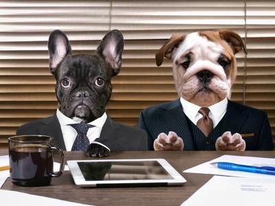 背広を着た2匹の犬