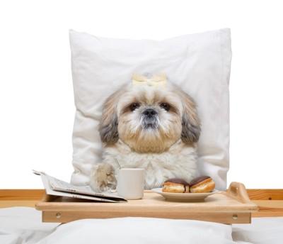 ベッドでご飯を食べる犬
